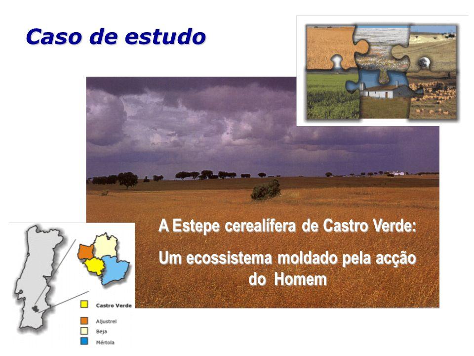 A Estepe cerealífera de Castro Verde: Um ecossistema moldado pela acção do Homem Caso de estudo