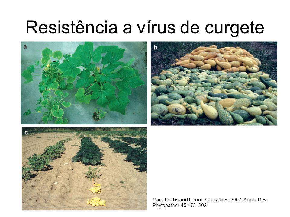 Resistência a vírus de curgete Marc Fuchs and Dennis Gonsalves. 2007. Annu. Rev. Phytopathol. 45:173–202