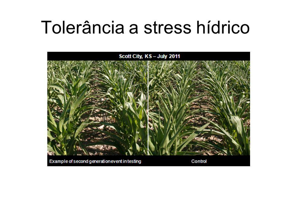 Tolerância a stress hídrico