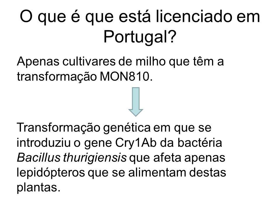 O que é que está licenciado em Portugal? Apenas cultivares de milho que têm a transformação MON810. Transformação genética em que se introduziu o gene