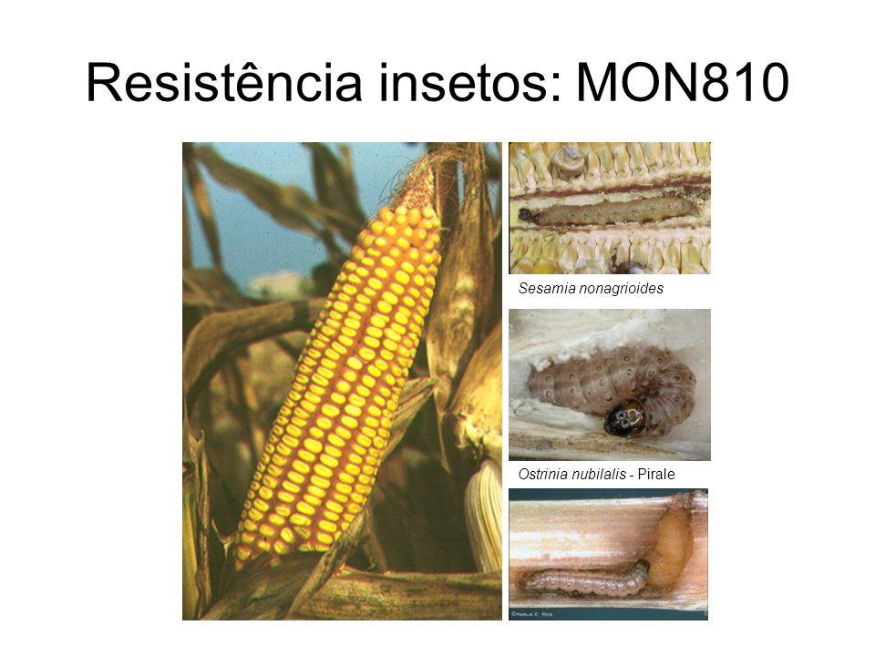 Resistência insetos: MON810 Sesamia nonagrioides Ostrinia nubilalis - Pirale