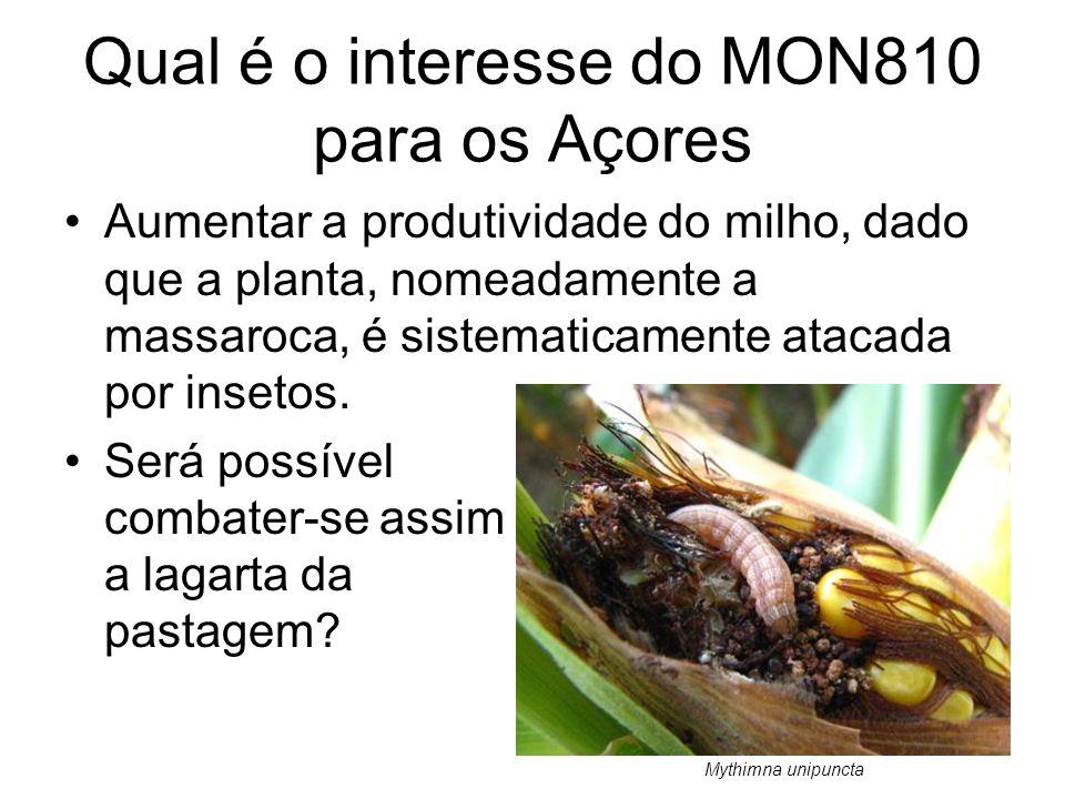 Qual é o interesse do MON810 para os Açores Aumentar a produtividade do milho, dado que a planta, nomeadamente a massaroca, é sistematicamente atacada