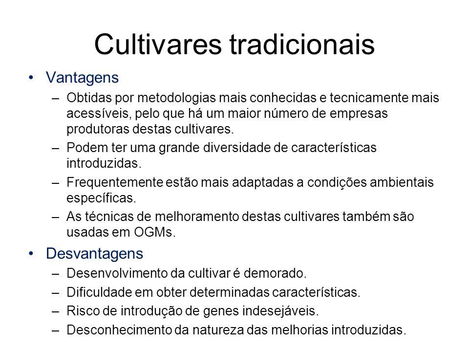 Cultivares tradicionais Vantagens –Obtidas por metodologias mais conhecidas e tecnicamente mais acessíveis, pelo que há um maior número de empresas pr