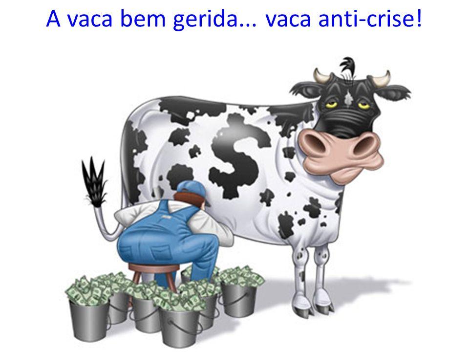 A vaca bem gerida... vaca anti-crise!