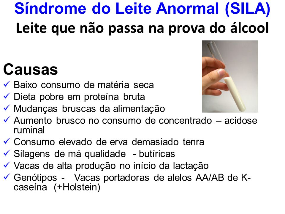 Síndrome do Leite Anormal (SILA) Leite que não passa na prova do álcool Causas Baixo consumo de matéria seca Dieta pobre em proteína bruta Mudanças br