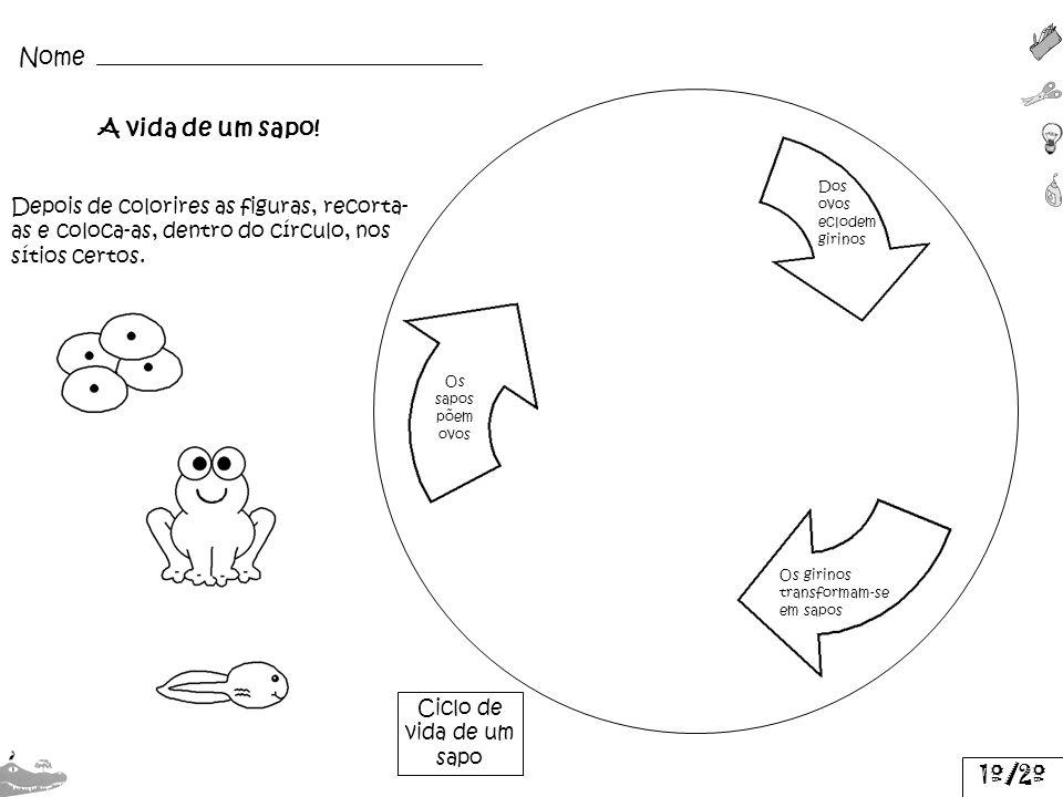 Dos ovos eclodem girinos Os girinos transformam-se em sapos Os sapos põem ovos Nome Ciclo de vida de um sapo Depois de colorires as figuras, recorta-