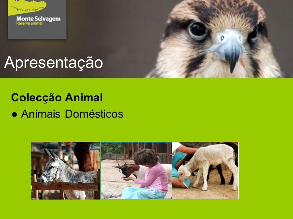 Apresentação Colecção Animal Animais Domésticos