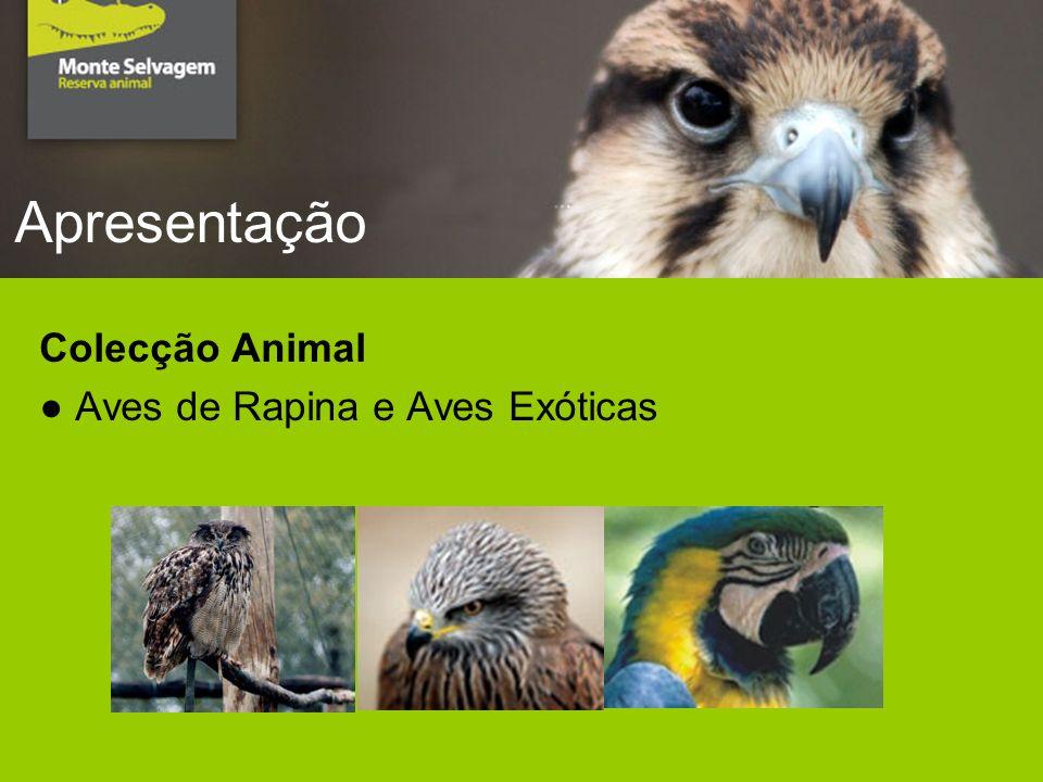 Apresentação Colecção Animal Aves de Rapina e Aves Exóticas