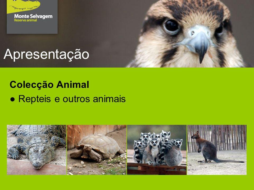 Apresentação Colecção Animal Repteis e outros animais