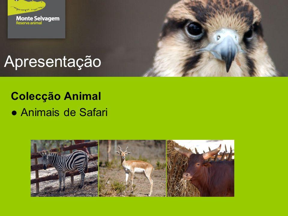 Apresentação Colecção Animal Animais de Safari