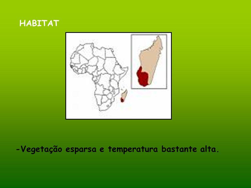 HABITAT -Vegetação esparsa e temperatura bastante alta.
