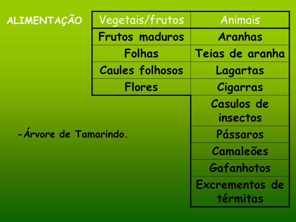 ALIMENTAÇÃO -Árvore de Tamarindo. Vegetais/frutosAnimais Frutos madurosAranhas FolhasTeias de aranha Caules folhososLagartas FloresCigarras Casulos de