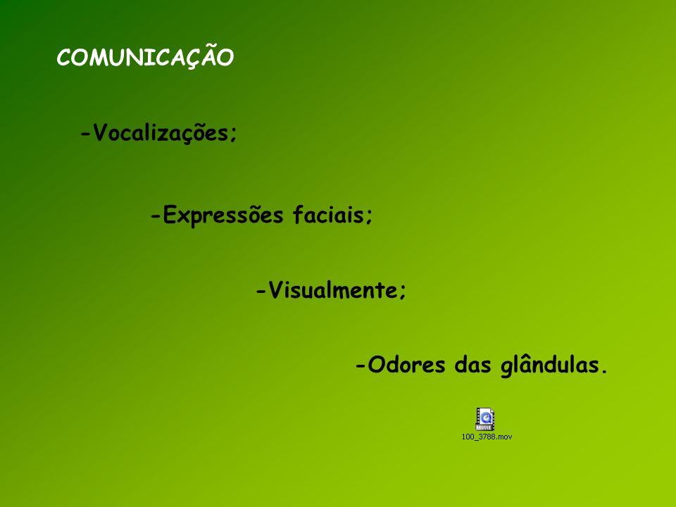 COMUNICAÇÃO -Visualmente; -Vocalizações; -Expressões faciais; -Odores das glândulas.