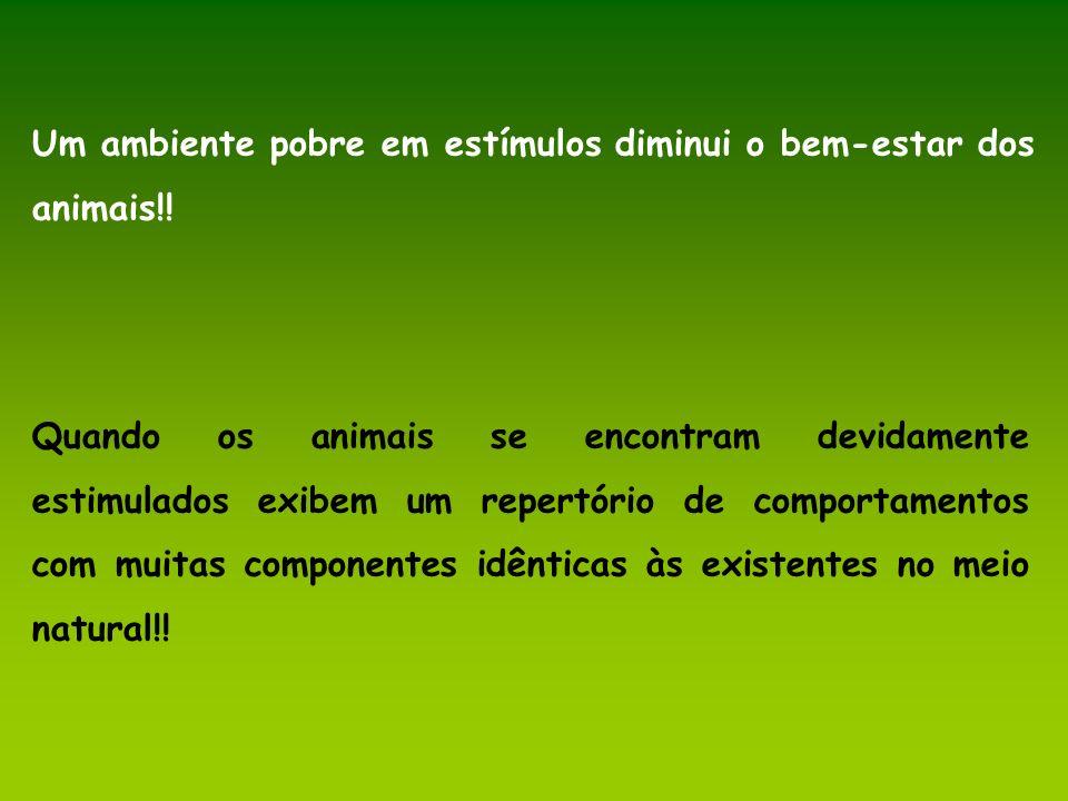Um ambiente pobre em estímulos diminui o bem-estar dos animais!! Quando os animais se encontram devidamente estimulados exibem um repertório de compor