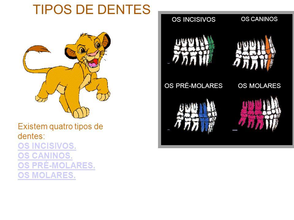 TIPOS DE DENTES OS INCISIVOS OS CANINOS OS PRÉ-MOLARESOS MOLARES Existem quatro tipos de dentes: OS INCISIVOS. OS CANINOS. OS PRÉ-MOLARES. OS INCISIVO