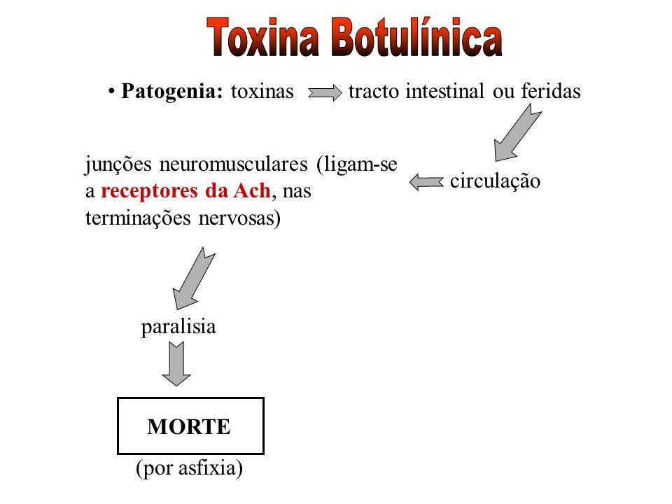 Patogenia:tracto intestinal ou feridastoxinas circulação junções neuromusculares (ligam-se a receptores da Ach, nas terminações nervosas) paralisia MO