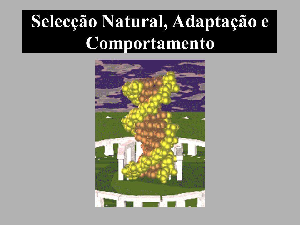 Selecção Natural, Adaptação e Comportamento