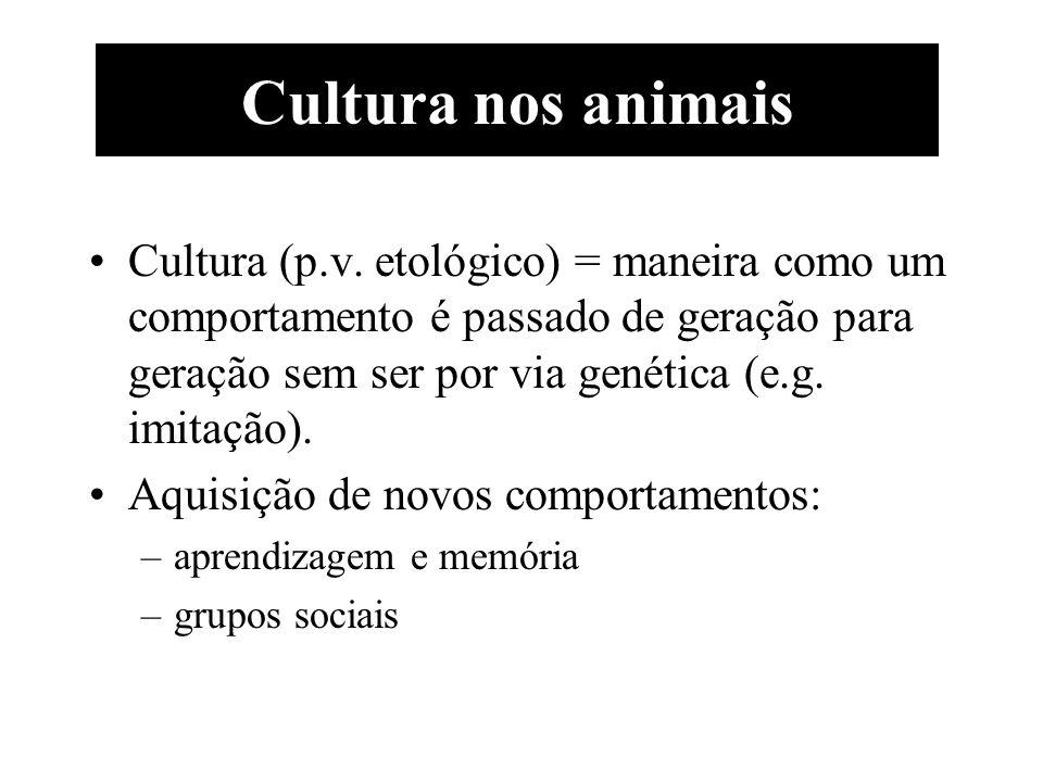 Cultura (p.v. etológico) = maneira como um comportamento é passado de geração para geração sem ser por via genética (e.g. imitação). Aquisição de novo