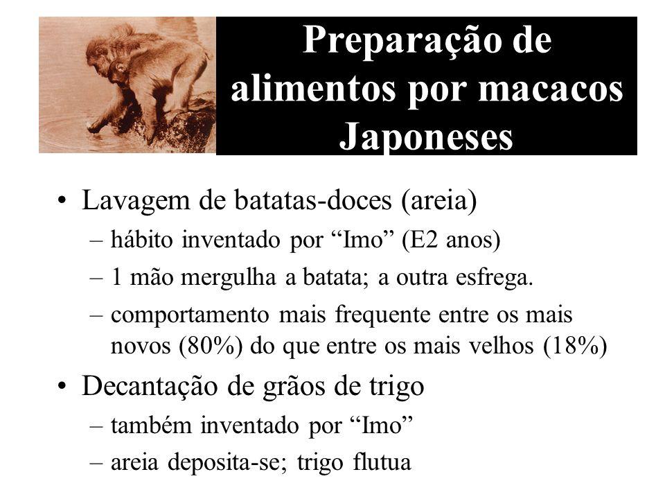 Lavagem de batatas-doces (areia) –hábito inventado por Imo ( 2 anos) –1 mão mergulha a batata; a outra esfrega. –comportamento mais frequente entre os