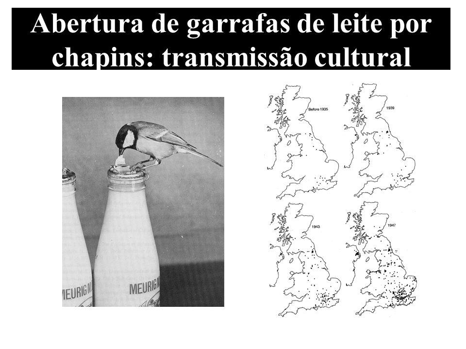Abertura de garrafas de leite por chapins: transmissão cultural