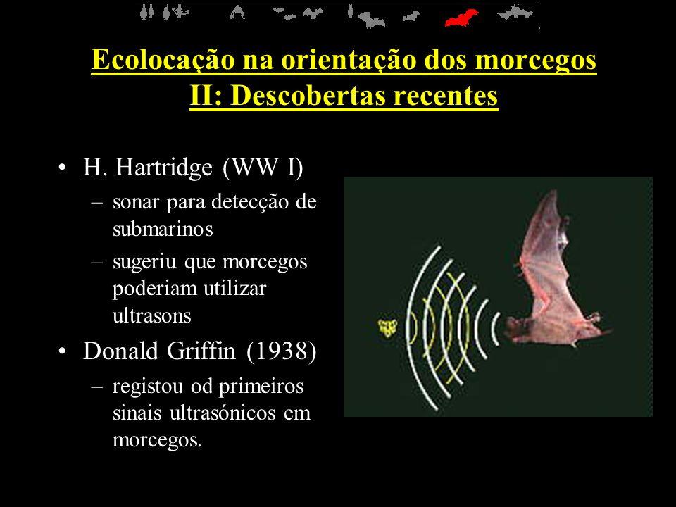Ecolocação na orientação dos morcegos II: Descobertas recentes H.