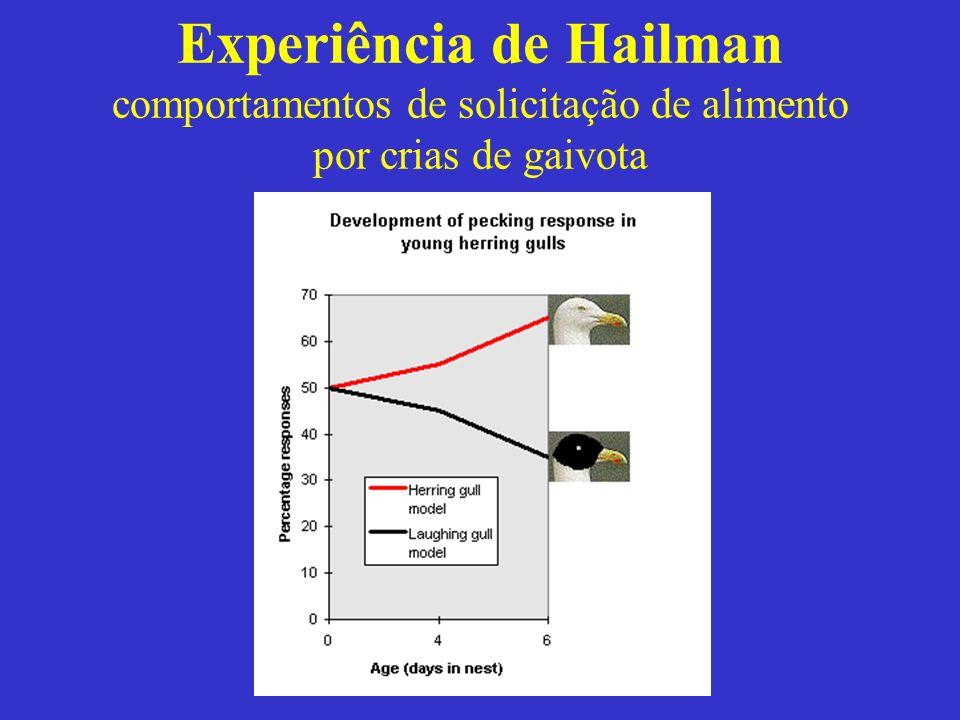 Experiência de Hailman comportamentos de solicitação de alimento por crias de gaivota
