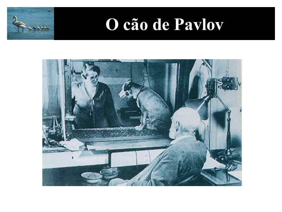 O cão de Pavlov