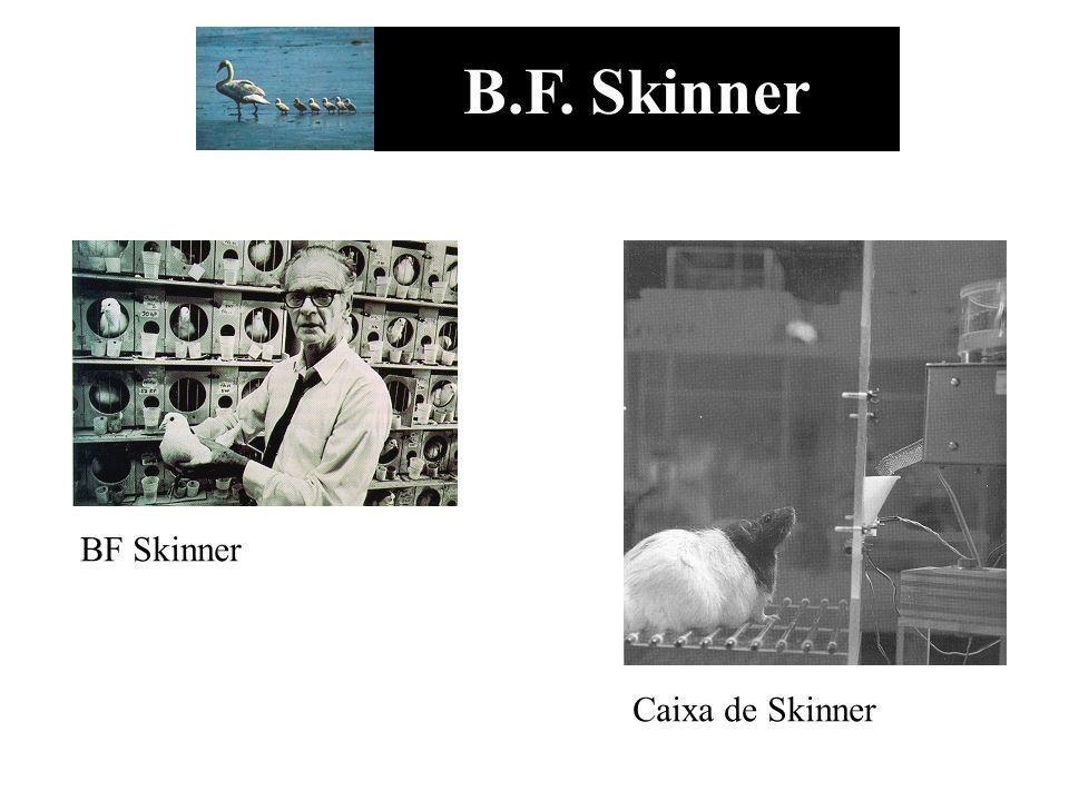 B.F. Skinner BF Skinner Caixa de Skinner