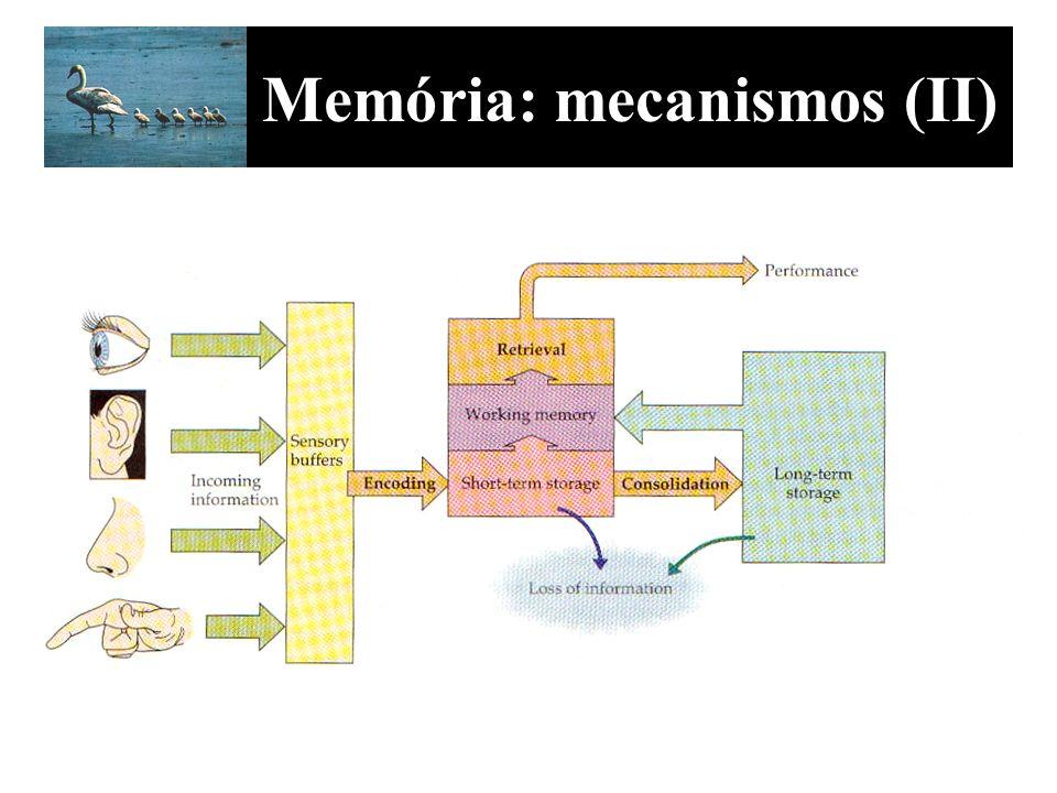 Memória: mecanismos (II)