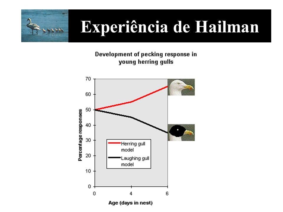 Experiência de Hailman