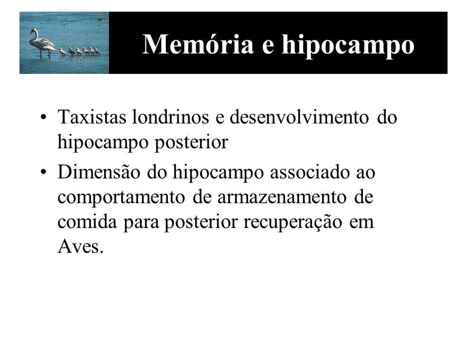 Memória e hipocampo Taxistas londrinos e desenvolvimento do hipocampo posterior Dimensão do hipocampo associado ao comportamento de armazenamento de c