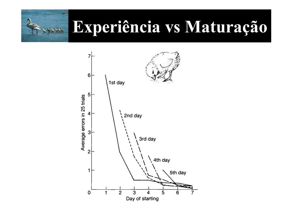 Experiência vs Maturação