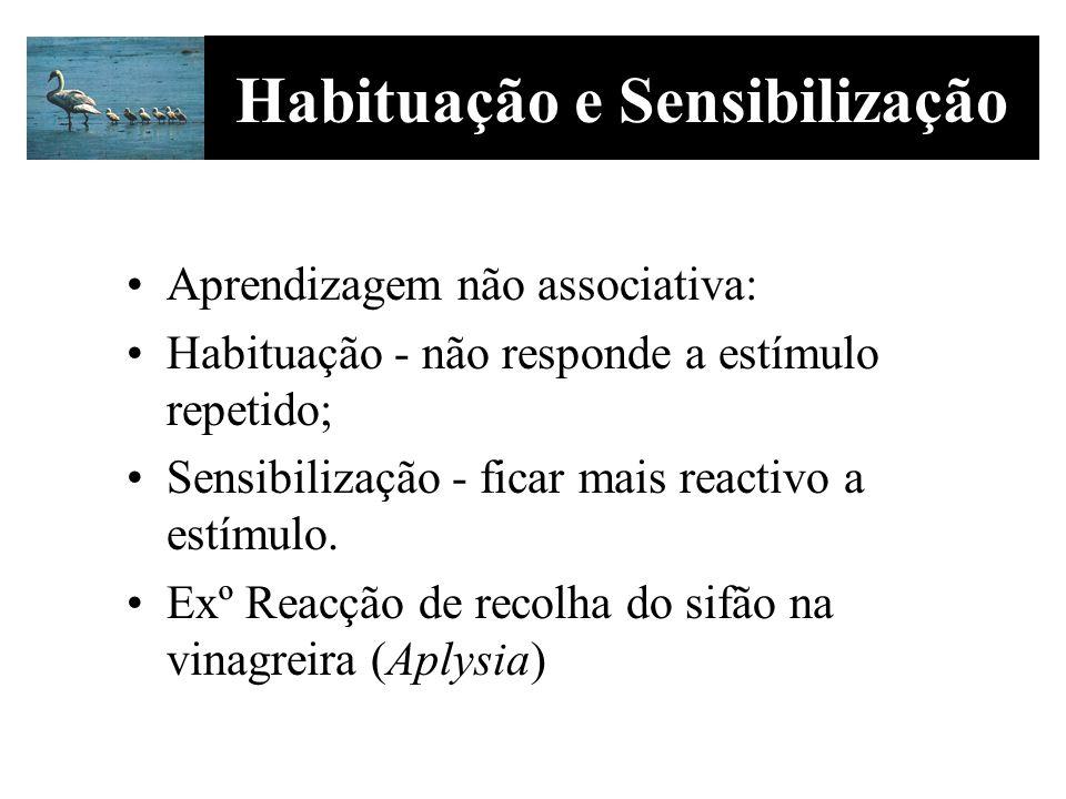Aprendizagem não associativa: Habituação - não responde a estímulo repetido; Sensibilização - ficar mais reactivo a estímulo. Exº Reacção de recolha d