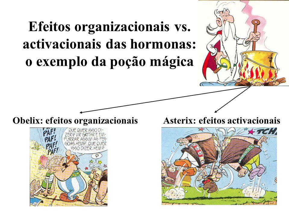 Efeitos organizacionais vs. activacionais das hormonas: o exemplo da poção mágica Asterix: efeitos activacionaisObelix: efeitos organizacionais