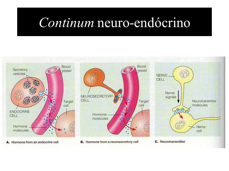 Famílias de hormonas Esteróides –lípidos; colesterol Peptídeos –cadeias de amino-ácidos Aminas –Adrenalina; tirosina