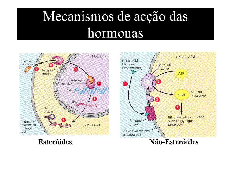 Mecanismos de acção das hormonas EsteróidesNão-Esteróides