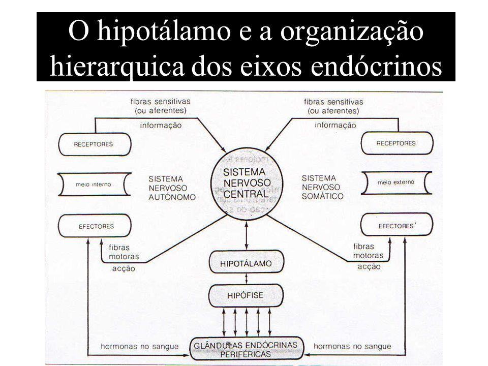 O hipotálamo e a organização hierarquica dos eixos endócrinos