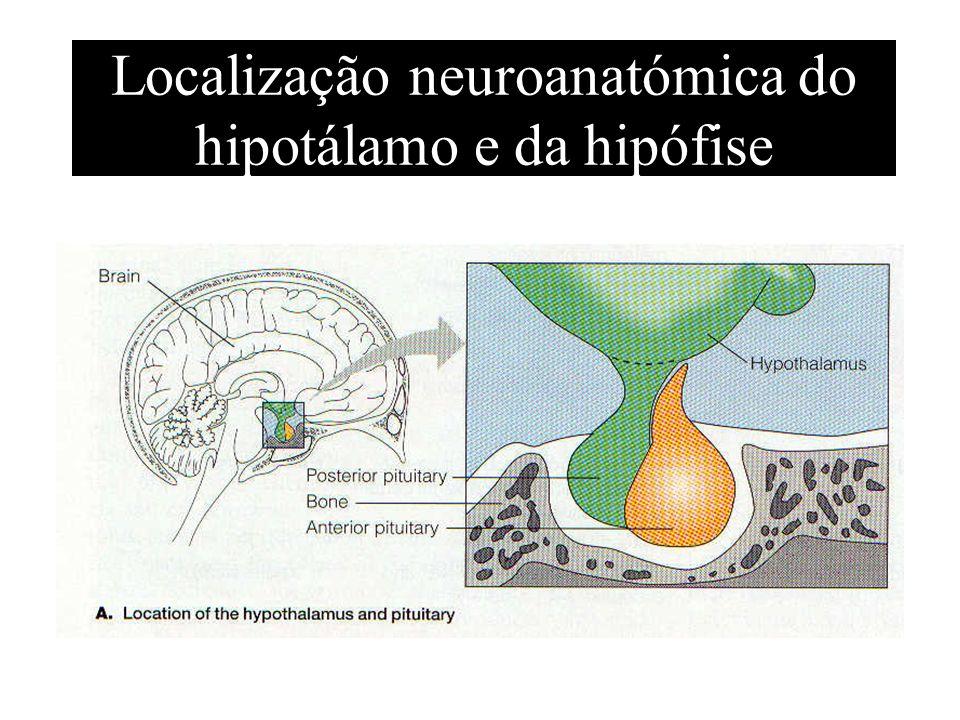 Localização neuroanatómica do hipotálamo e da hipófise