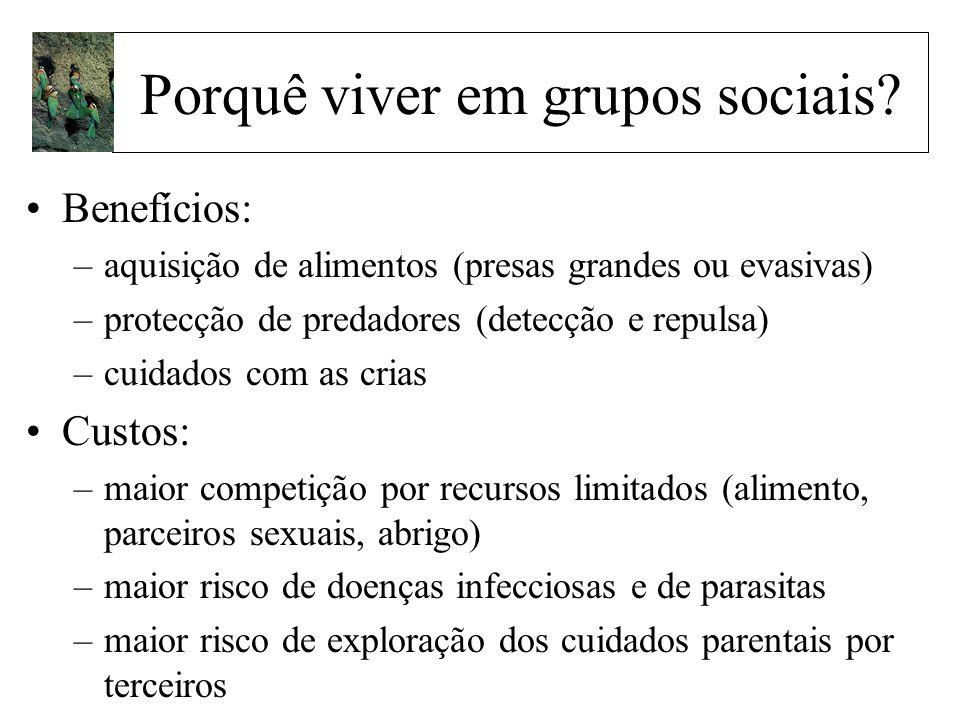 Porquê viver em grupos sociais? Benefícios: –aquisição de alimentos (presas grandes ou evasivas) –protecção de predadores (detecção e repulsa) –cuidad