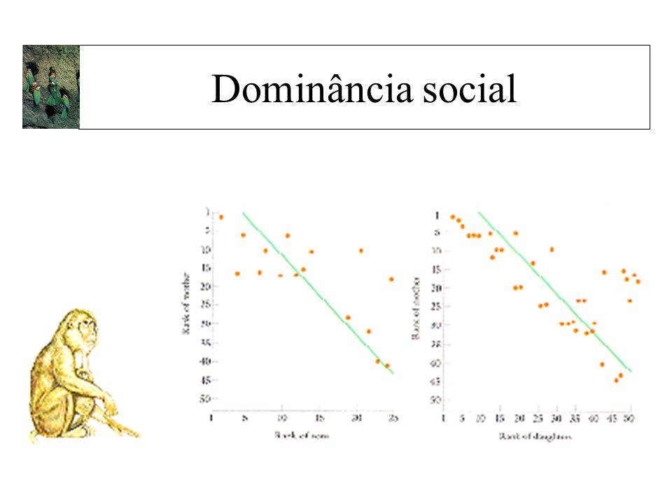Dominância social