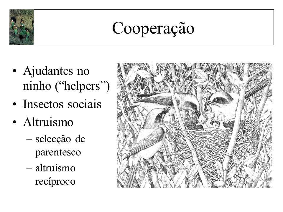 Ajudantes no ninho (helpers) Insectos sociais Altruismo –selecção de parentesco –altruismo recíproco Cooperação