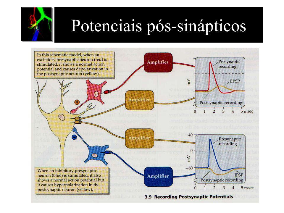 Potenciais pós-sinápticos