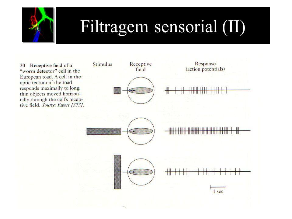 Filtragem sensorial (II)