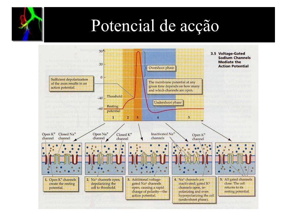 Organização do sistema nervoso dos vertebrados