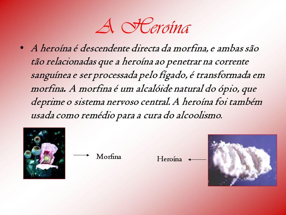 A Heroína A heroína é descendente directa da morfina, e ambas são tão relacionadas que a heroína ao penetrar na corrente sanguínea e ser processada pe