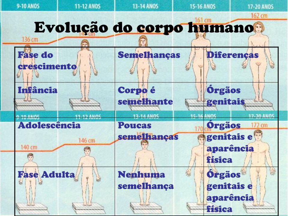 Evolução do corpo humano Fase do crescimento SemelhançasDiferenças InfânciaCorpo é semelhante Órgãos genitais AdolescênciaPoucas semelhanças Órgãos ge