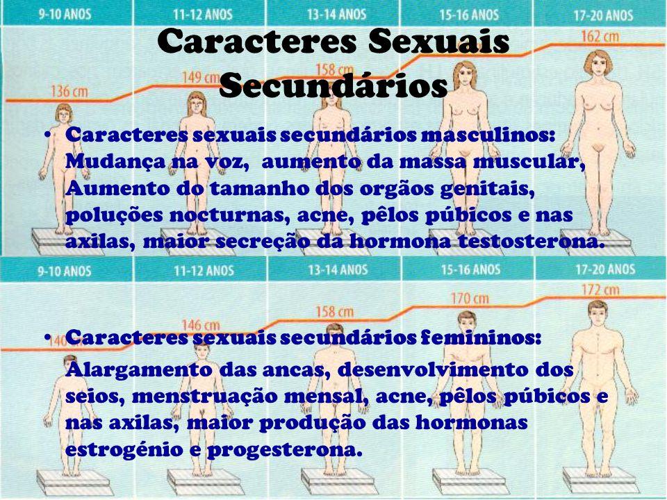 Caracteres Sexuais Secundários Caracteres sexuais secundários masculinos: Mudança na voz, aumento da massa muscular, Aumento do tamanho dos orgãos gen