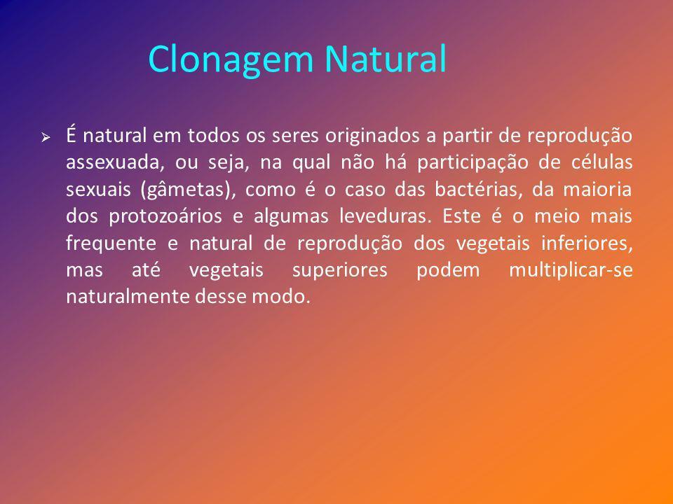 Clonagem Natural É natural em todos os seres originados a partir de reprodução assexuada, ou seja, na qual não há participação de células sexuais (gâm