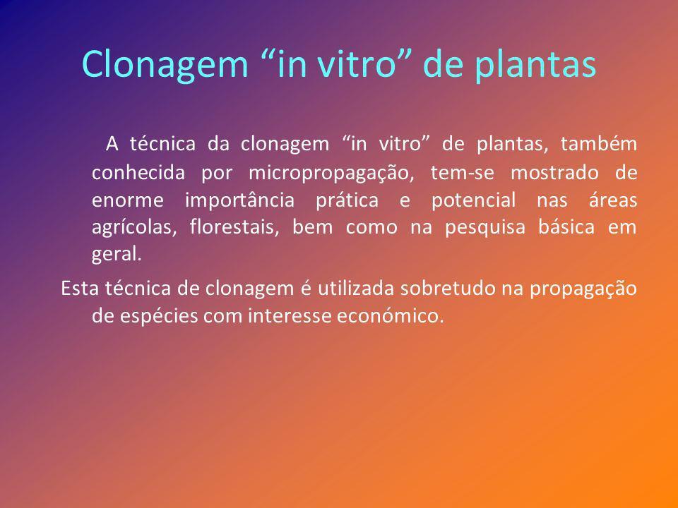 Clonagem in vitro de plantas A técnica da clonagem in vitro de plantas, também conhecida por micropropagação, tem-se mostrado de enorme importância pr
