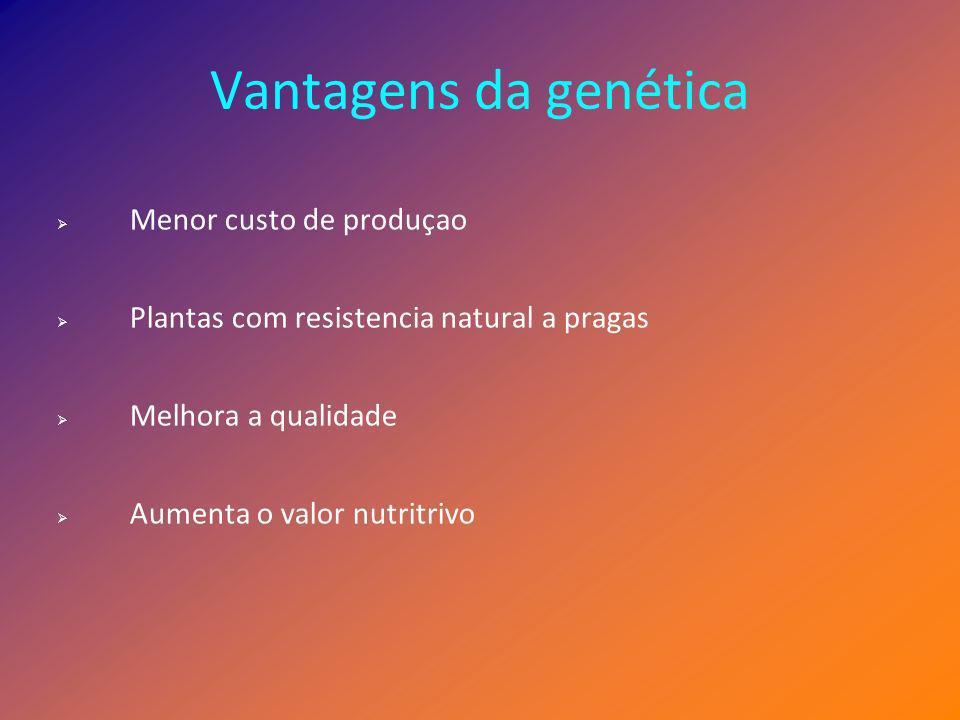 Desvantagens da genética Efeitos secundários por introducçao de genes que se podem tornar nocivos ao ser humano; Problemas ambientais por perda de controlo sobre a disperçao dos genes; Resistencia a antibióticos.